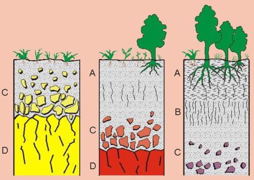 La formaci n y evoluci n del suelo ies hern ndez pacheco for Proceso de formacion del suelo